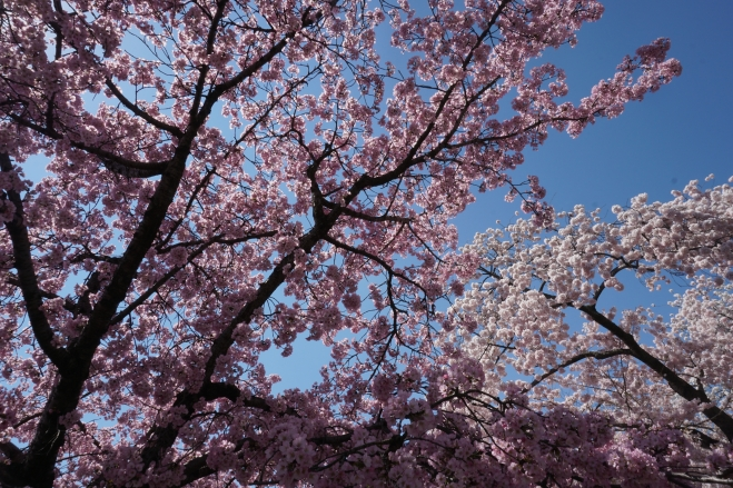 the blossoms